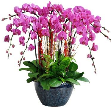 9 dallı mor orkide  Karaman güvenli kaliteli hızlı çiçek