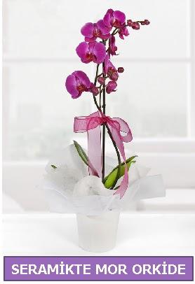Seramik içerisinde birinci kalite tek dallı mor orkide  Karaman ucuz çiçek gönder