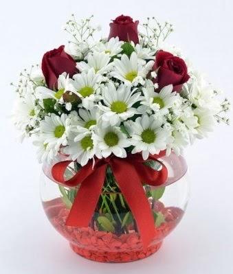 Fanusta 3 Gül ve Papatya  Karaman uluslararası çiçek gönderme