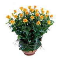 Karaman çiçek mağazası , çiçekçi adresleri  10 adet sari gül tanzim cam yada mika vazoda çiçek