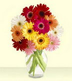 Karaman çiçek , çiçekçi , çiçekçilik  cam yada mika vazoda 15 özel gerbera