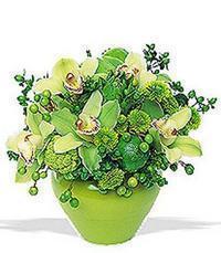 cam yada mika vazoda 5 adet orkide   Karaman çiçek satışı