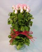 13 adet pembe gül silindirde   Karaman çiçekçi mağazası