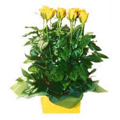 11 adet sari gül aranjmani  Karaman çiçek satışı