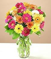 Karaman çiçek yolla , çiçek gönder , çiçekçi   17 adet karisik gerbera