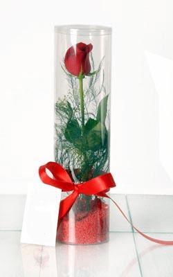 Karaman çiçekçi mağazası  Silindir vazoda tek kirmizi gül