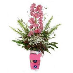 Karaman online çiçek gönderme sipariş  cam yada mika vazo içerisinde tek dal orkide çiçegi