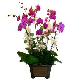 Karaman çiçek servisi , çiçekçi adresleri  4 adet orkide çiçegi