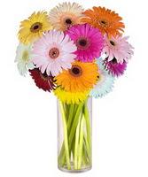 Karaman anneler günü çiçek yolla  Farkli renklerde 15 adet gerbera çiçegi