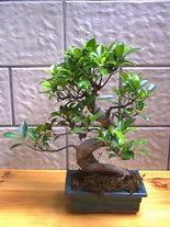 ithal bonsai saksi çiçegi  Karaman online çiçekçi , çiçek siparişi