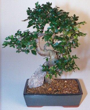 Karaman hediye çiçek yolla  ithal bonsai saksi çiçegi  Karaman cicekciler , cicek siparisi