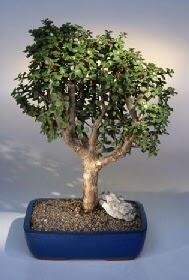 Karaman çiçek siparişi sitesi  ithal bonsai saksi çiçegi  Karaman 14 şubat sevgililer günü çiçek