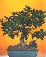 Karaman internetten çiçek satışı  ithal bonsai saksi çiçegi  Karaman anneler günü çiçek yolla