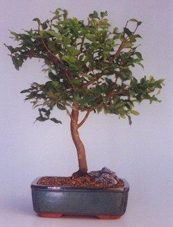 Karaman çiçek siparişi vermek  ithal bonsai saksi çiçegi  Karaman yurtiçi ve yurtdışı çiçek siparişi
