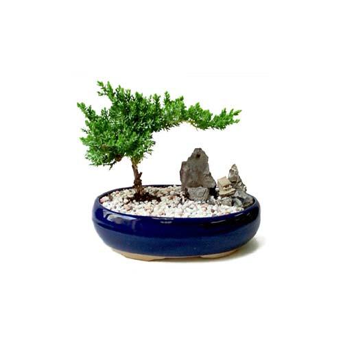 ithal bonsai saksi çiçegi  Karaman çiçek siparişi sitesi