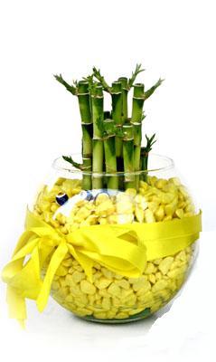 cam fanus içerisinde bambo  Karaman uluslararası çiçek gönderme