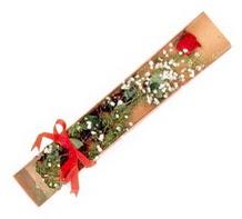 1 adet kirmizi gül  Karaman internetten çiçek satışı