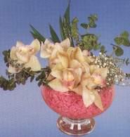 Karaman çiçek gönderme sitemiz güvenlidir  Dal orkide kalite bir hediye