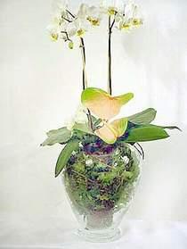 Karaman çiçekçiler  Cam yada mika vazoda özel orkideler