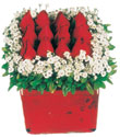 Karaman çiçek siparişi sitesi  Kare cam yada mika içinde kirmizi güller - anneler günü seçimi özel çiçek