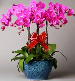 7 dallı mor orkide  Karaman çiçek yolla , çiçek gönder , çiçekçi