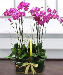 4 dallı mor orkide  Karaman çiçek gönderme