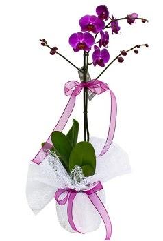 Tek dallı mor orkide  Karaman internetten çiçek satışı