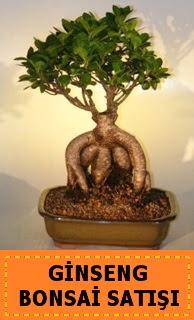 Ginseng bonsai satışı japon ağacı  Karaman çiçek servisi , çiçekçi adresleri