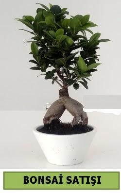 Bonsai japon ağacı satışı  Karaman İnternetten çiçek siparişi