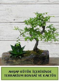 Ahşap kütük bonsai kaktüs teraryum  Karaman anneler günü çiçek yolla