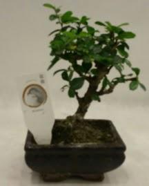 Küçük minyatür bonsai japon ağacı  Karaman çiçek siparişi sitesi