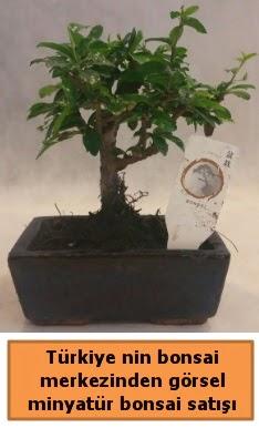 Japon ağacı bonsai satışı ithal görsel  Karaman çiçekçi mağazası