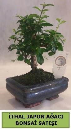 İthal japon ağacı bonsai bitkisi satışı  Karaman internetten çiçek satışı