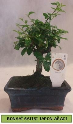Minyatür bonsai ağacı satışı  Karaman çiçek siparişi sitesi