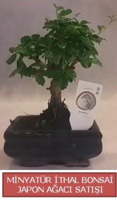 Küçük görsel bonsai japon ağacı bitkisi  Karaman internetten çiçek siparişi