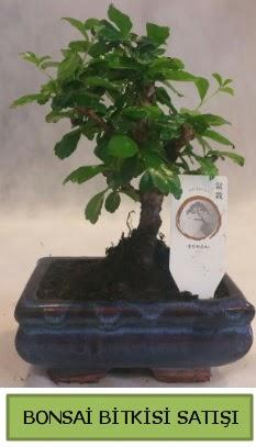 Bonsai ithal görsel minyatür japon ağacı  Karaman çiçek siparişi vermek