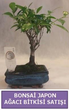 İthal Bonsai japon ağacı bitkisi satışı  Karaman ucuz çiçek gönder