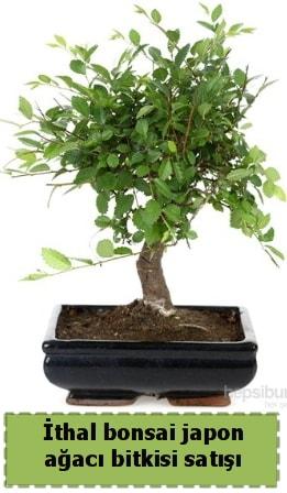 İthal bonsai saksı çiçeği Japon ağacı satışı  Karaman ucuz çiçek gönder