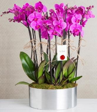 11 dallı mor orkide metal vazoda  Karaman hediye çiçek yolla