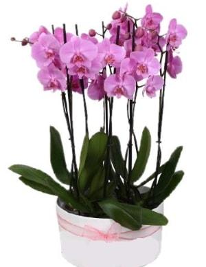 Beyaz seramik içerisinde 7 dallı mor orkide  Karaman internetten çiçek satışı