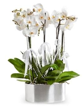 Beş dallı metal saksıda beyaz orkide  Karaman çiçekçi mağazası