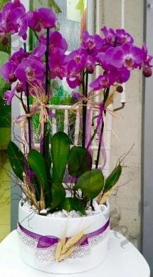 Seramik vazoda 4 dallı mor lila orkide  Karaman çiçek online çiçek siparişi