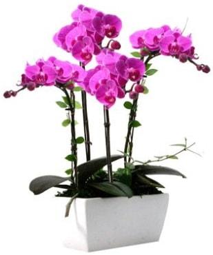 Seramik vazo içerisinde 4 dallı mor orkide  Karaman çiçekçiler