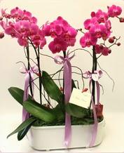 Beyaz seramik içerisinde 4 dallı orkide  Karaman çiçek siparişi vermek