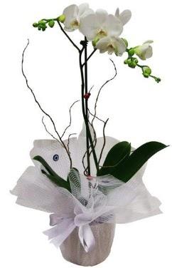 Tek dallı beyaz orkide  Karaman çiçek servisi , çiçekçi adresleri