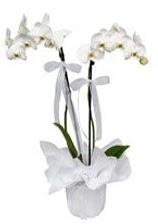 2 dallı beyaz orkide  Karaman çiçek gönderme