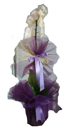 Tek dallı beyaz orkide süper kalite ithal  Karaman cicekciler , cicek siparisi