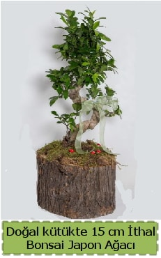 Doğal kütükte İthal bonsai japon ağacı  Karaman çiçek siparişi sitesi