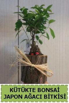 Kütük içerisinde doğal bonsai ağacı  Karaman internetten çiçek satışı