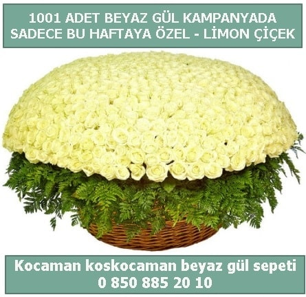 1001 adet beyaz gül sepeti özel kampanyada  Karaman hediye çiçek yolla